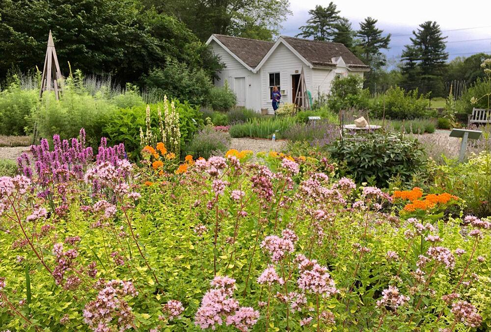 Herb garden in bloom - photo