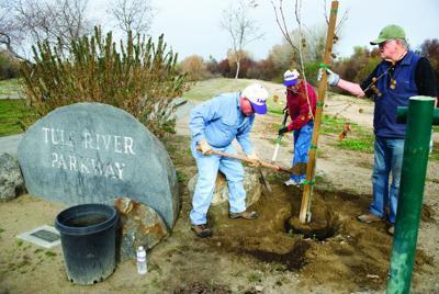 Breakfast Lions members plant trees.