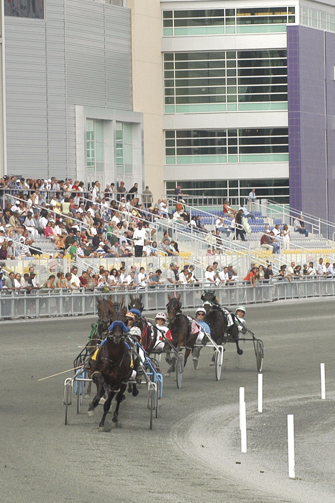 Harness Racing 2.jpg
