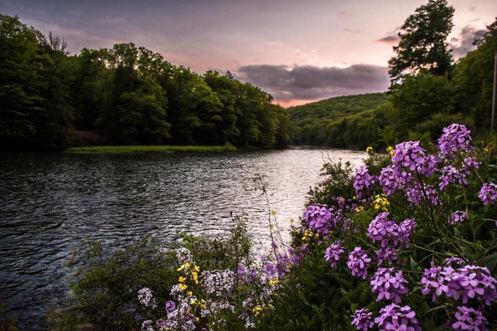 Clarion River Cook Forest flowers sunset - Mountain Man Photography.jpg