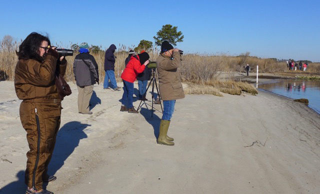 winter waterfowl walk.jpg