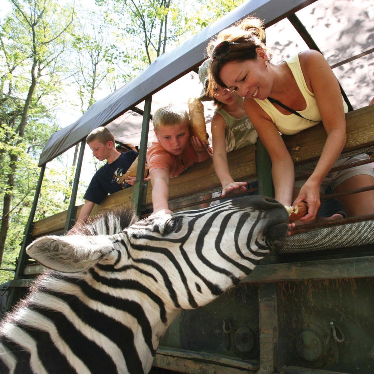 Catoctin Mountain Zoo Safari.jpg