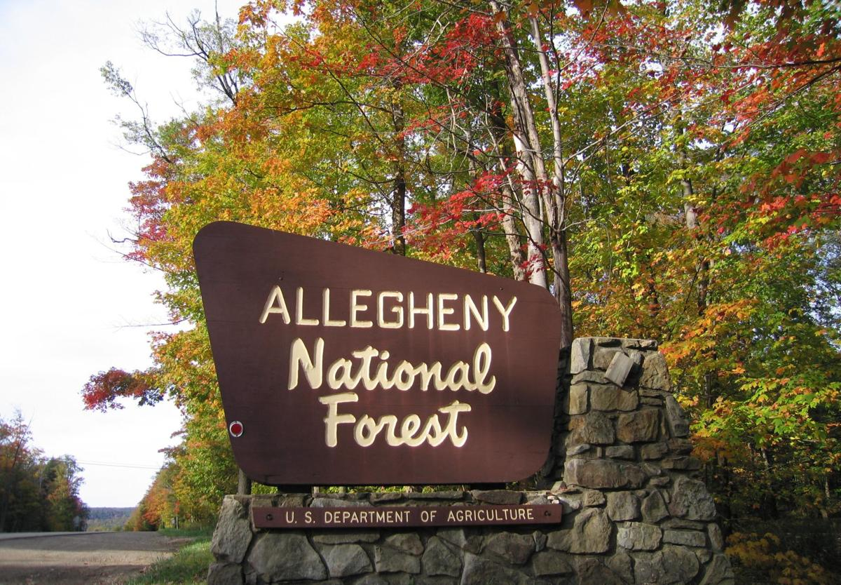 Allegheny-National-Forest-Sign-Fall-Foliage-McKean-County-PA.jpg