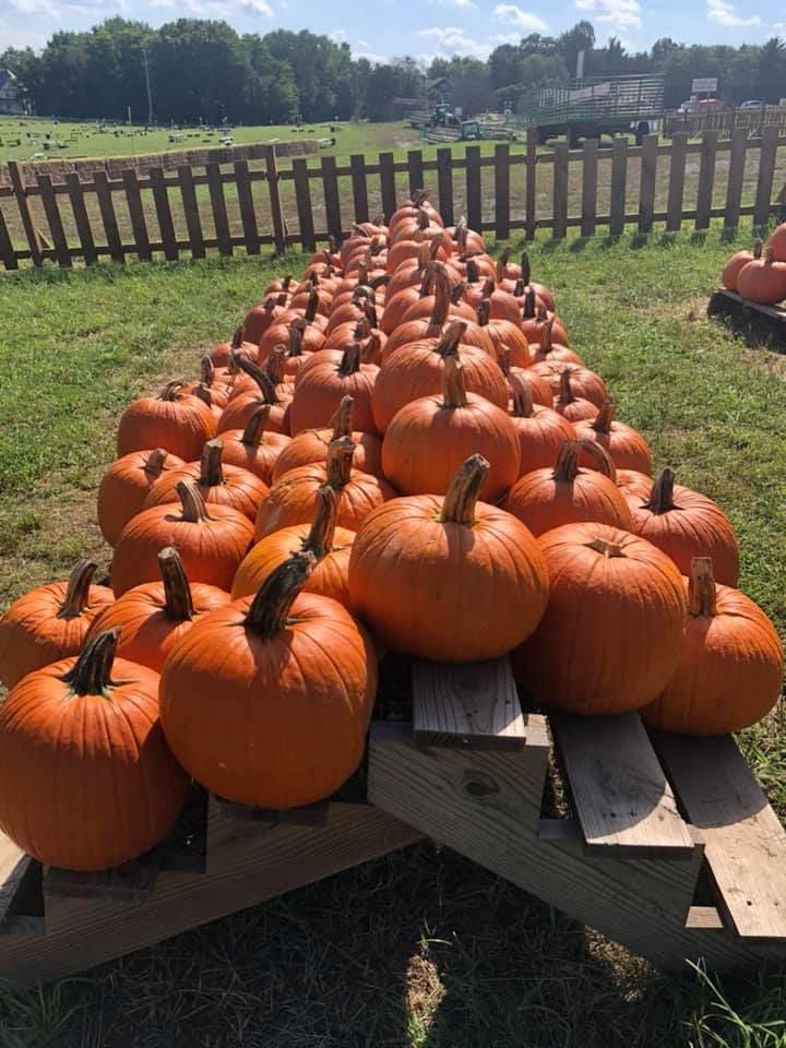 Summers Farm Pumpkin Patch