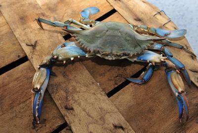 generic crab.jpg
