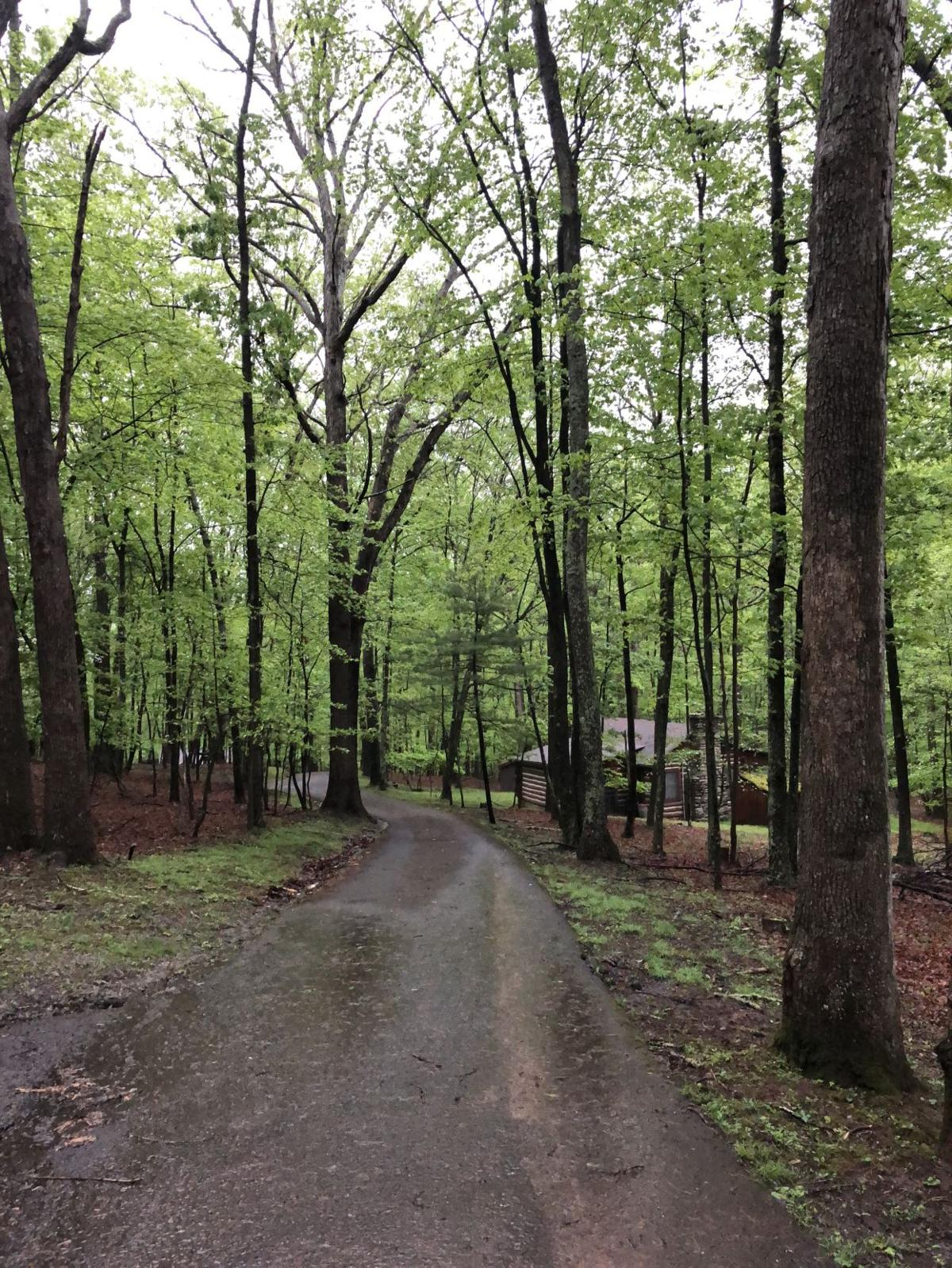 The beautiful forest at Lost River State Park.