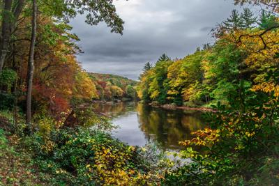 Clarion River Cook Forest fall leaves - Mountain Man Photography (2) (1).jpg