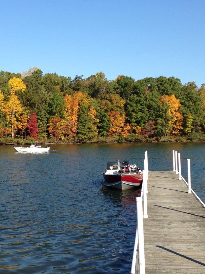 anna point fall leaves.jpg