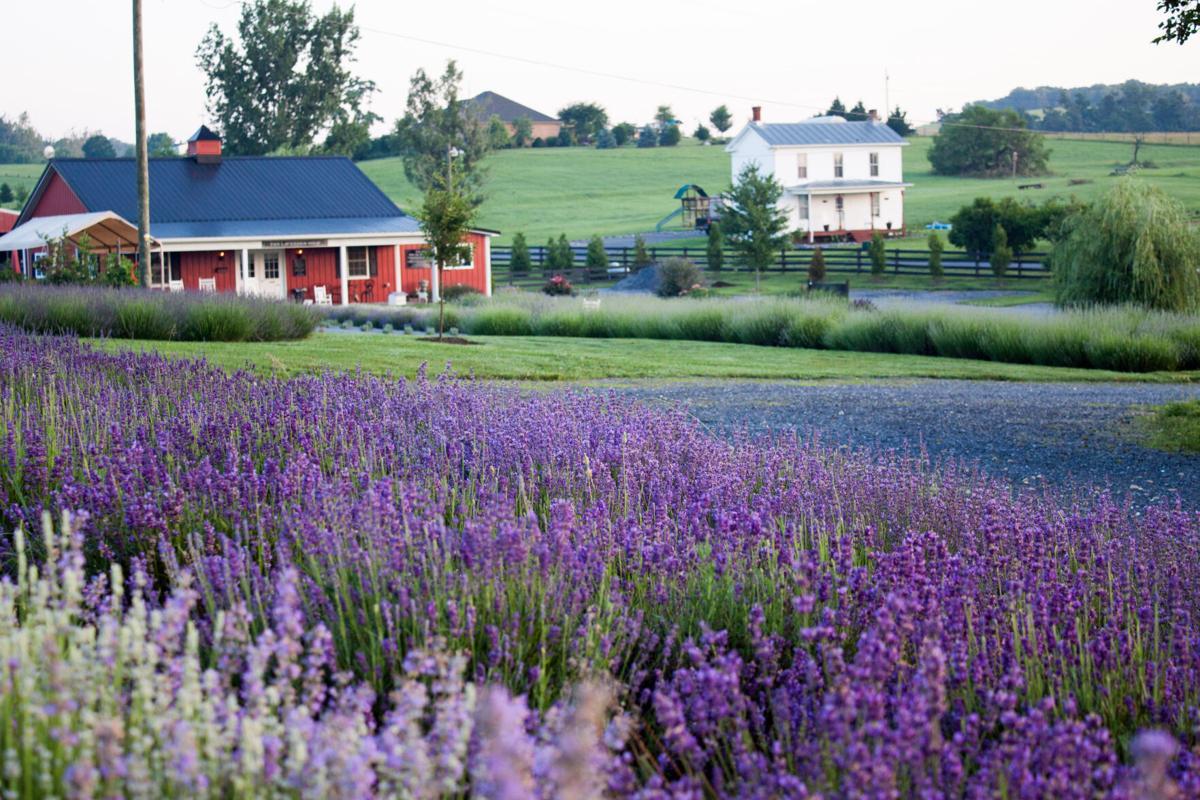 White Oak Lavender Farm (PC W.O.L.F.).jpg