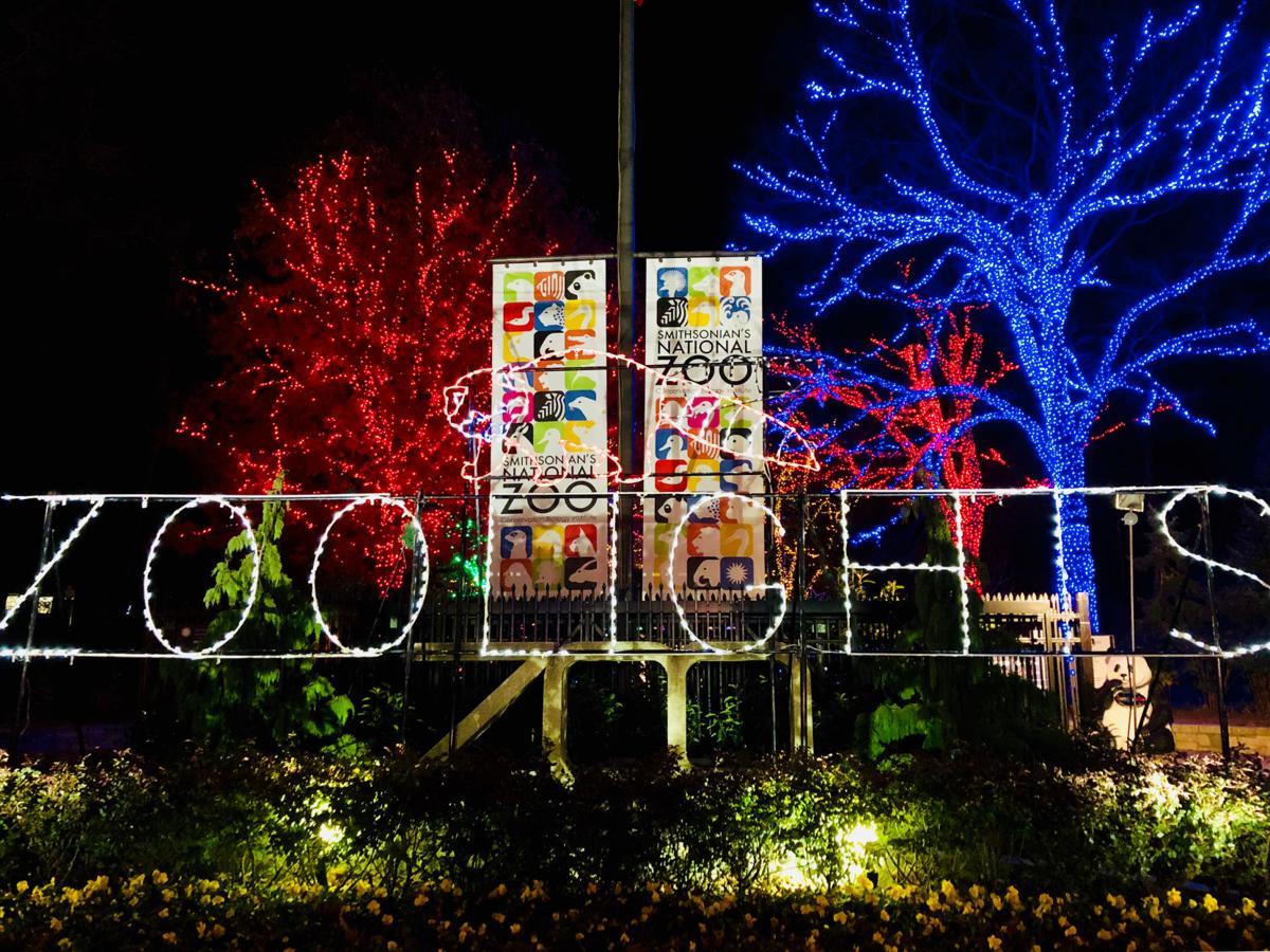 Zoo Lights .jpg