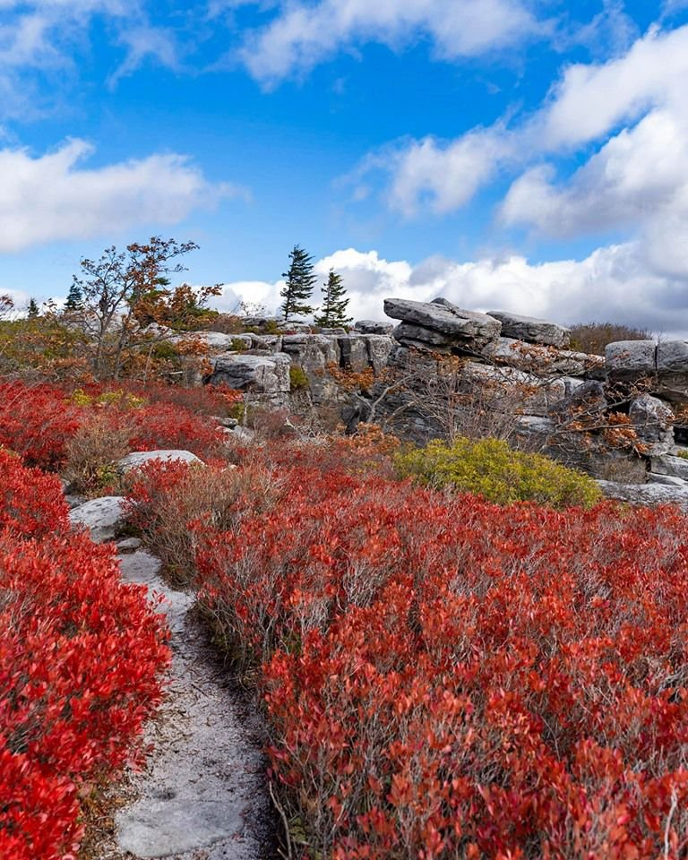 Dolly Sods1