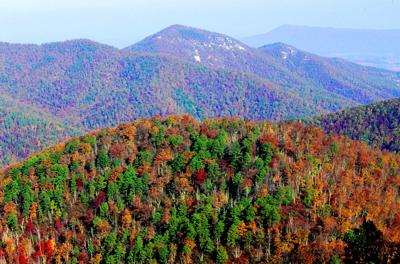 Fall brings a tale of pandas, apples, and founding fathers