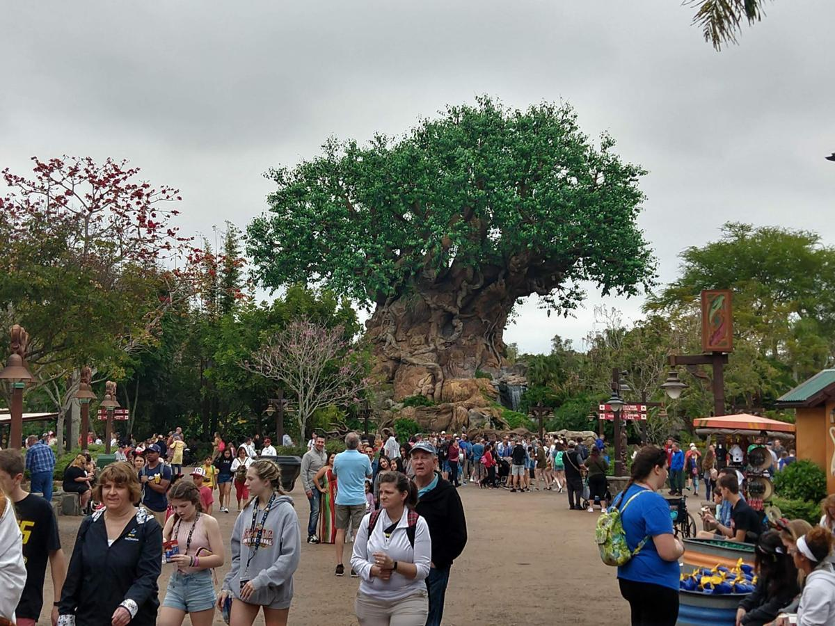 tree of life animal kingdom.jpg