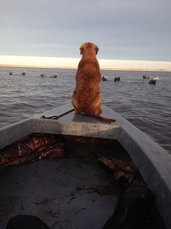 dog on bow.jpg