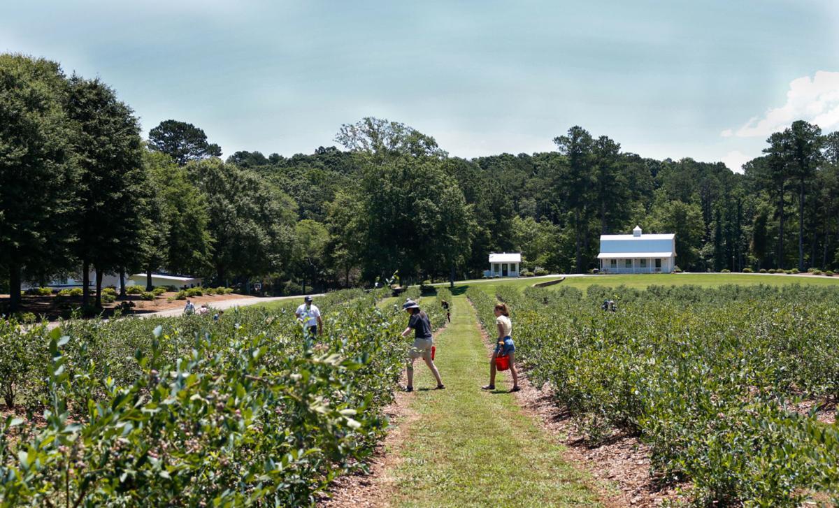DGD blueberries 002.jpg