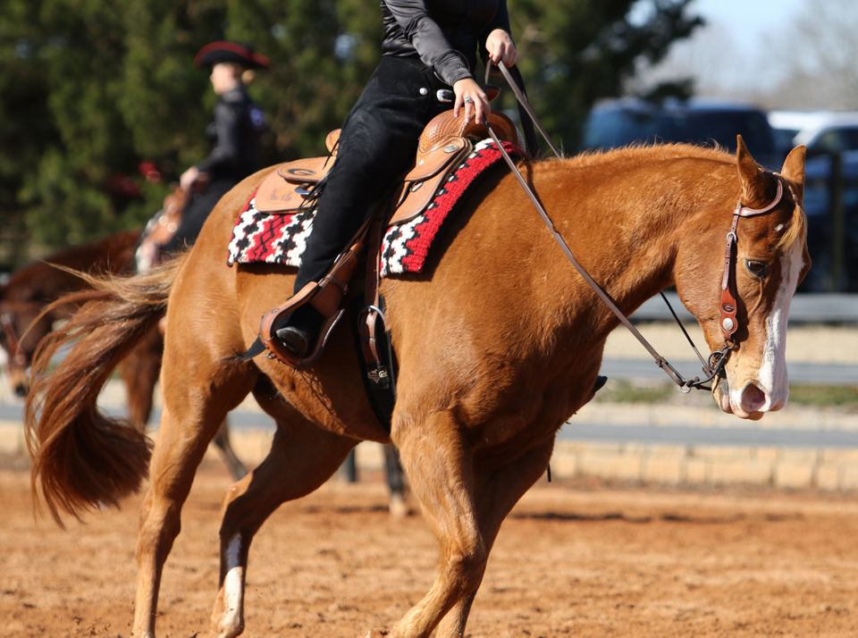 Georgia Equestrian Defeated By Auburn In Ncea National