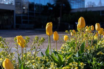 210322_SMH_Spring Botanical Gardens 019.jpg