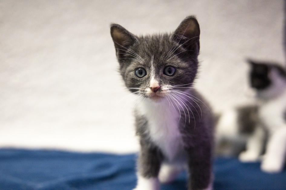 PHOTOS: 'Kitten season' arrives at Athens Area Humane Society