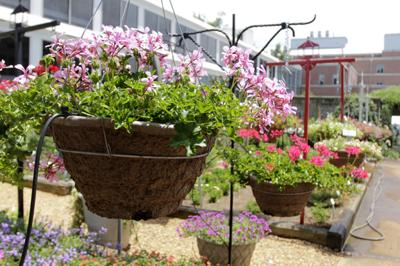 UGA Horticulture Trial Gardens