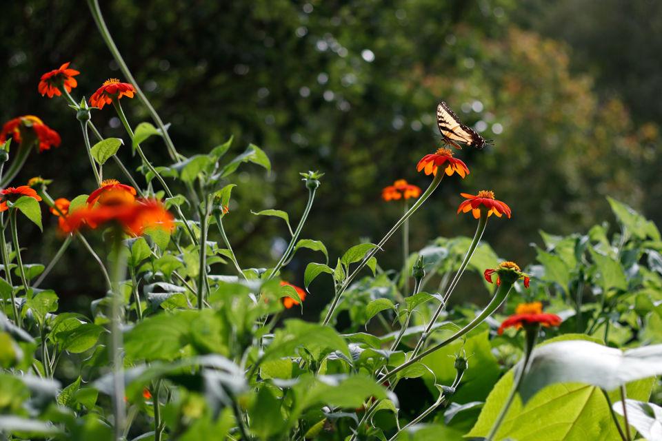 180831_mkd_botanical garden_0004 (1).jpg