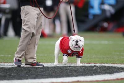 101 Bulldogs Uga Alumnus Attends 101 Football Games In A Row