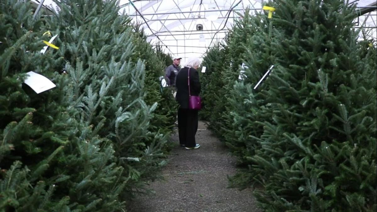 Athens sells Christmas trees