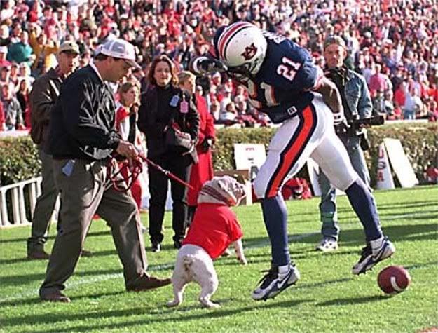UGA bites Auburn
