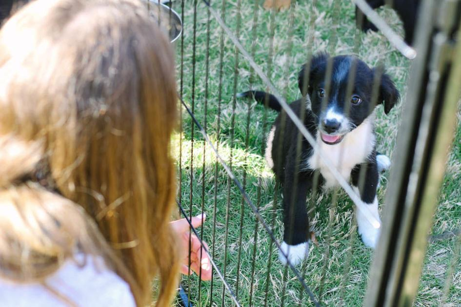 Rescue Paws UGA holds Puppies in the Park   Culture