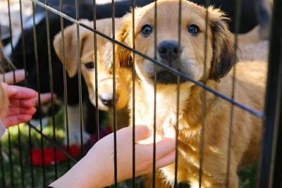 (180410)_KES_PuppiesatthePark_0009-1.jpg