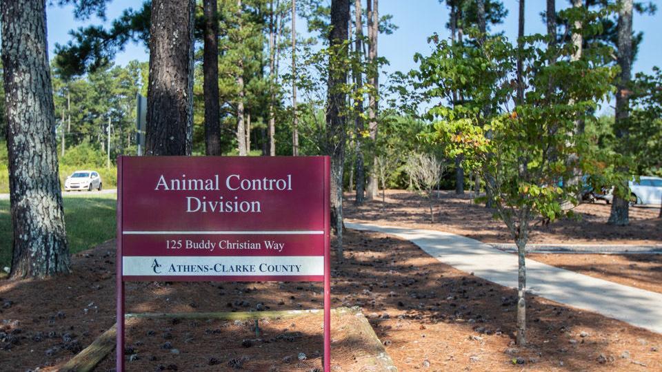 Athens animal shelter dog section under quarantine for virus exposure, community calls for better management