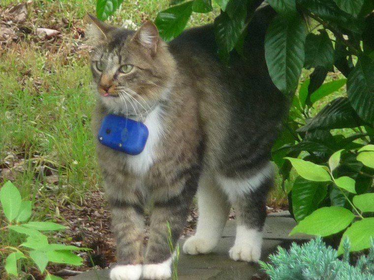 Kitty Cam