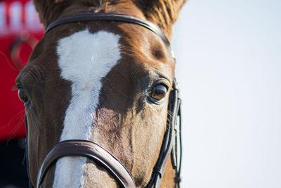 190927_ks_EquestrianvSweetBriar_0001.jpg