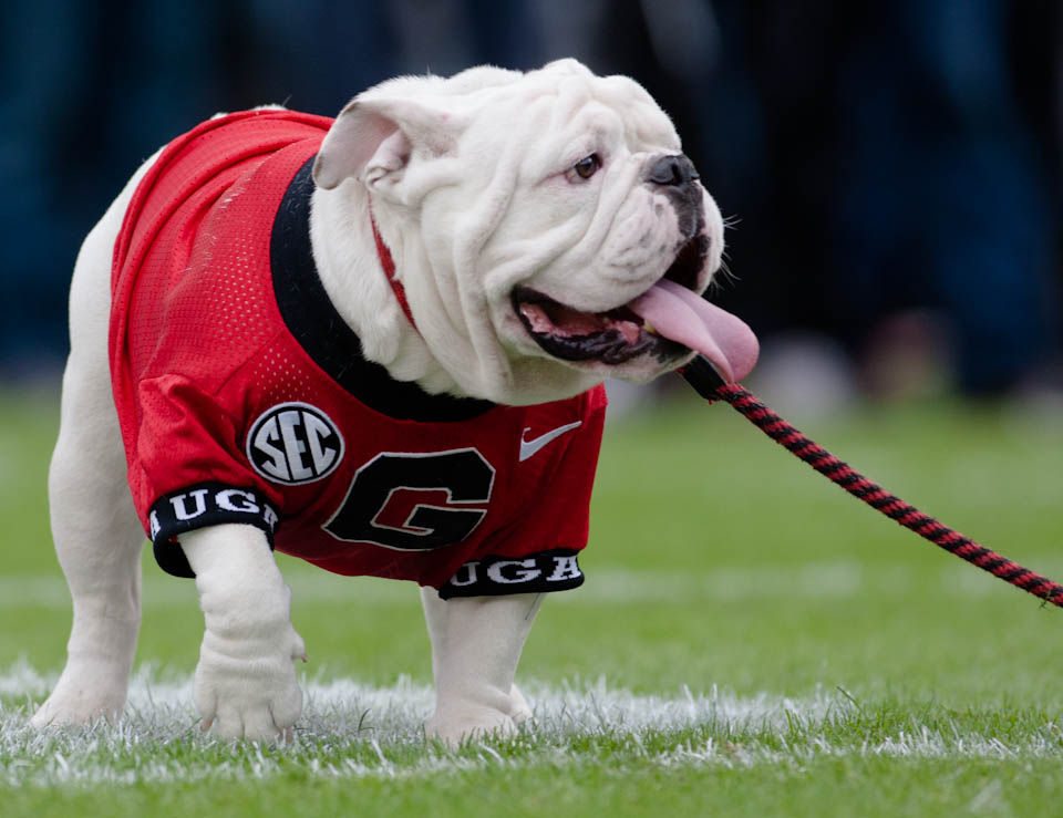 low priced c9eff 397c0 Over the Dog Years: The history of Uga, the most faithful ...