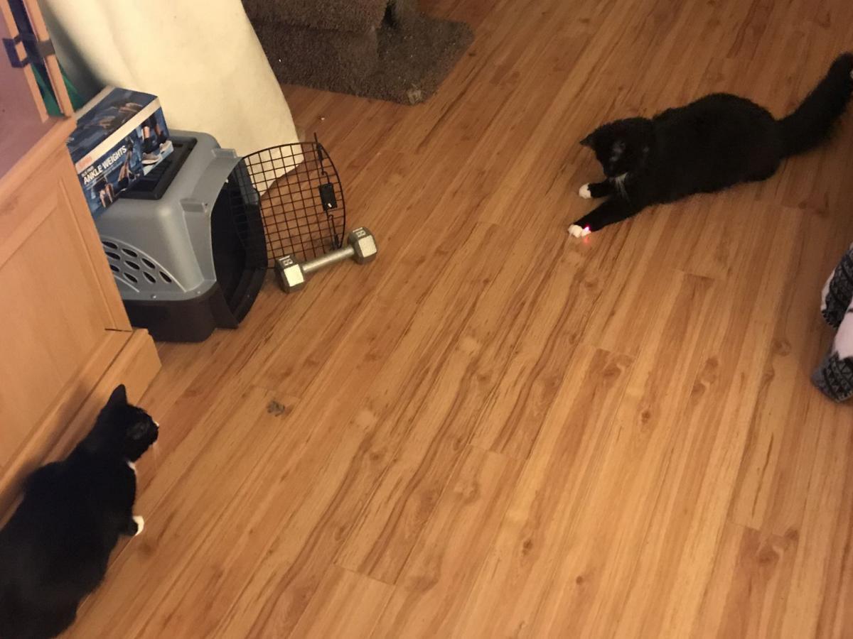 stroud's cats
