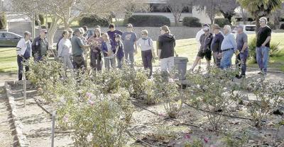Horticultural society to provide rose tips in Sylvan Park garden