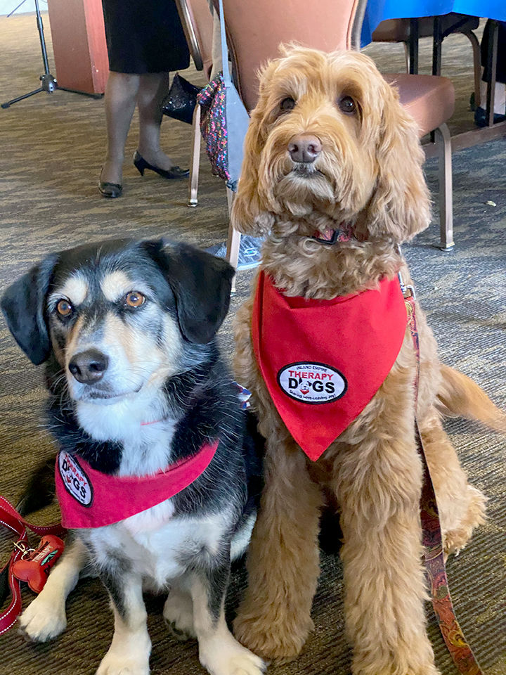 Therapy dogs Chance, left, and Elliot.