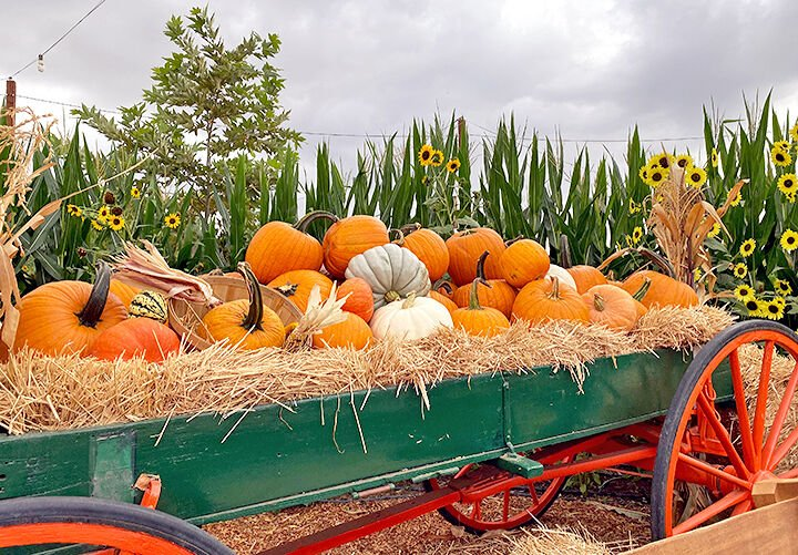 Pumpkin Patch opens safely for Halloween season.