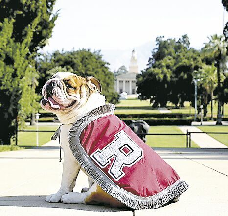 Addie, the University of Redlands seventh official mascot