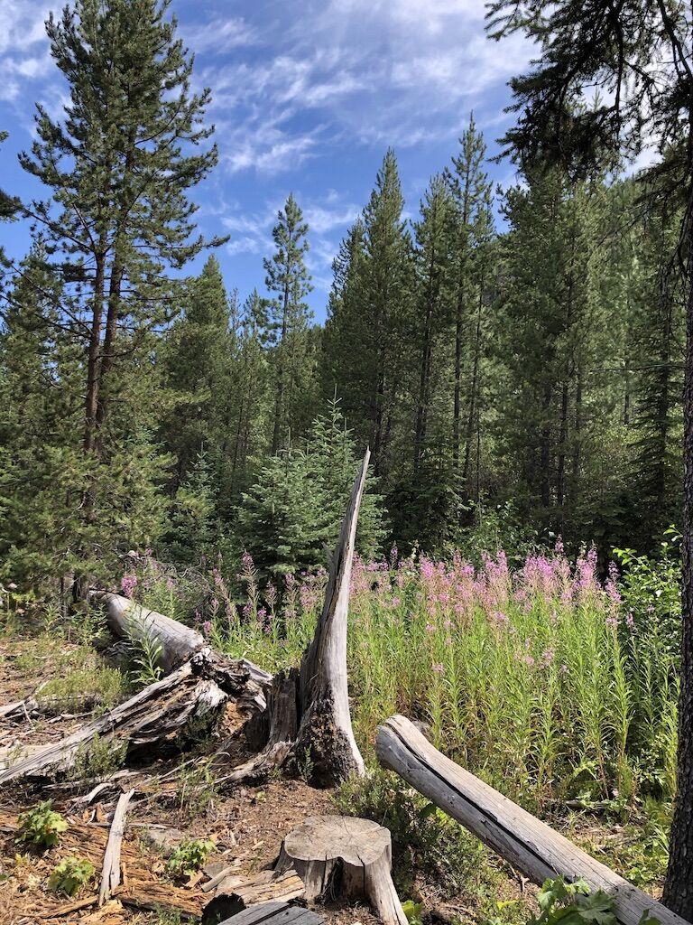 200826_spk_news_forestry_p3.jpg