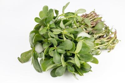 Fresh green purslane vegetable on the white background.