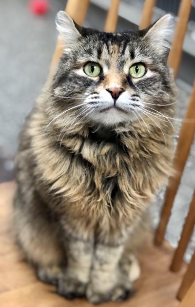 Pet of the Week: Jinx