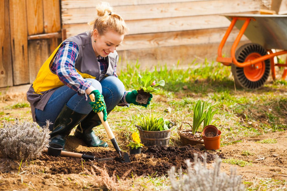 Woman is planting or working on flower bed