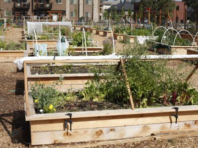 Growing an organic garden in Central Oregon.