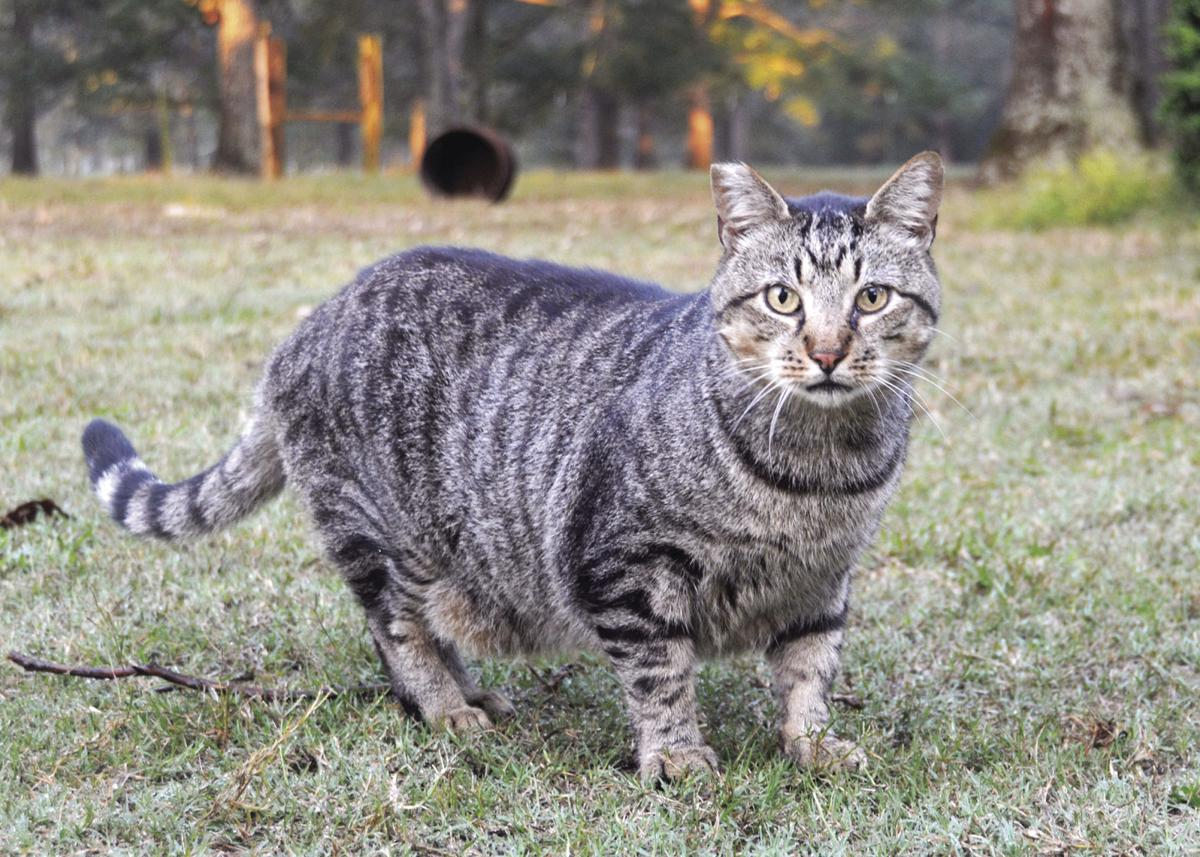 Future of MSU feral cats uncertain | News | reflector-online.com on squirrel home, chipmunk home, fast cat home, ferret home, mountain lion home, lizard home, duck home, pet cat home, dog cat home, stray cat home, cat lady home, pig cat home,