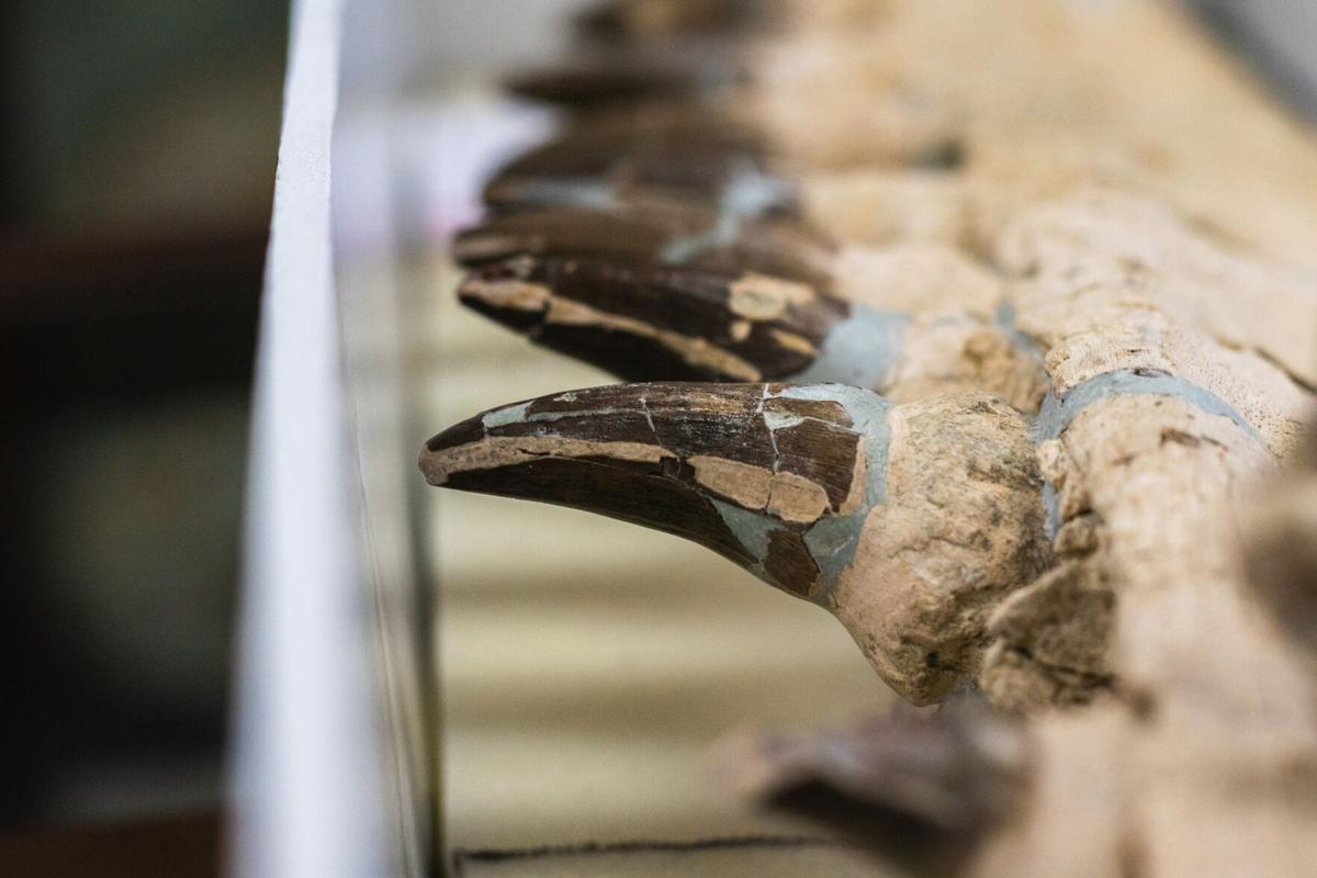 Digging for treasure: MSU geologists analyze prehistoric fossils found in Mississippi