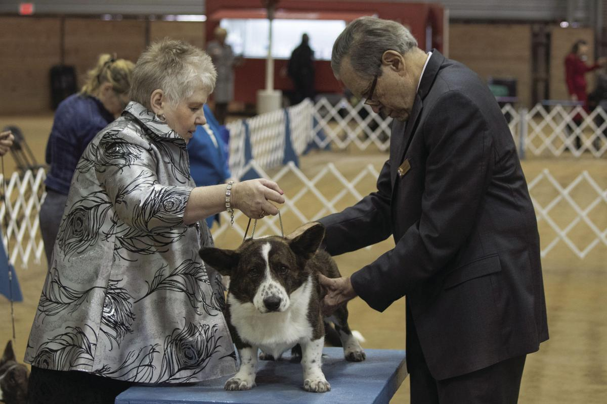 Dogs take over Horse Park for annual GTKC Dog Show