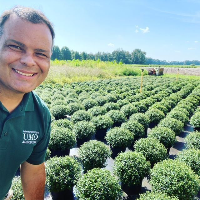 UMO plant sale