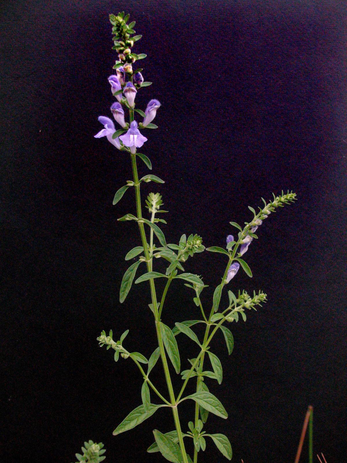 071418mysteryplant