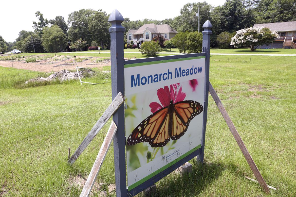Monarch Meadow at A Time for Science  lure butterflies 7