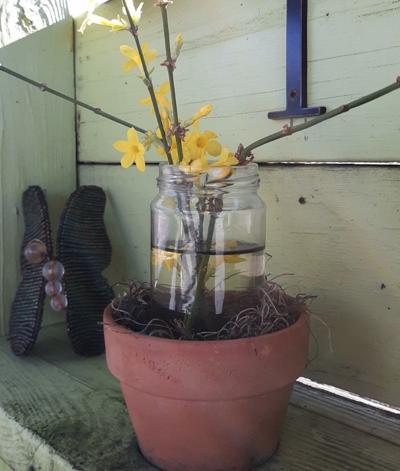 winter jasmine crop-1.jpg